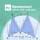 Harmonacci Patterns indicator for Metatrader
